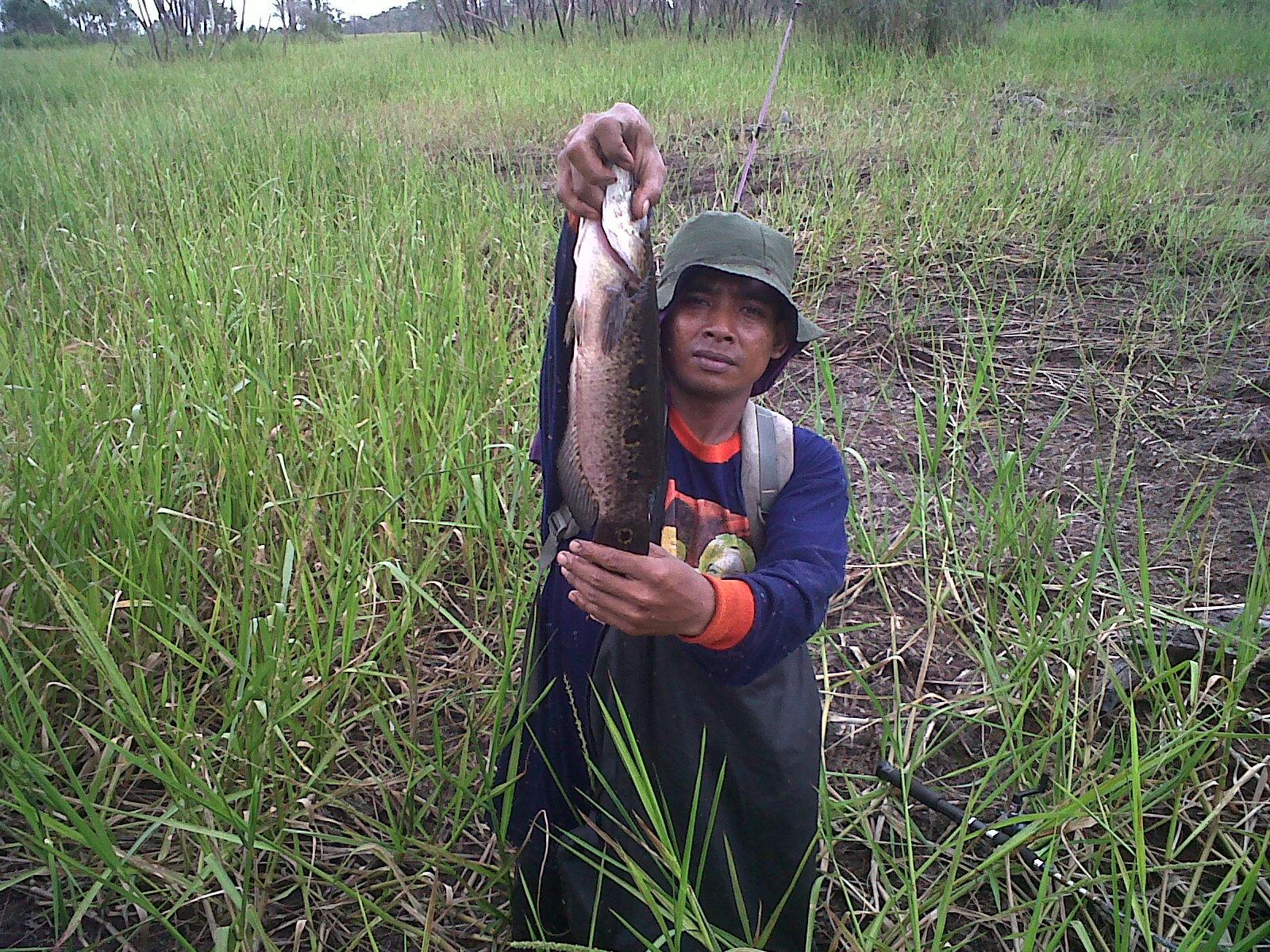 Menangkap Ikan Besar Menangkap Ikan Toman Yang
